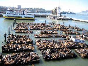 Look at all the sea lions!